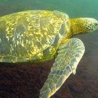 Digital Nomad Guide to Galapagos Islands