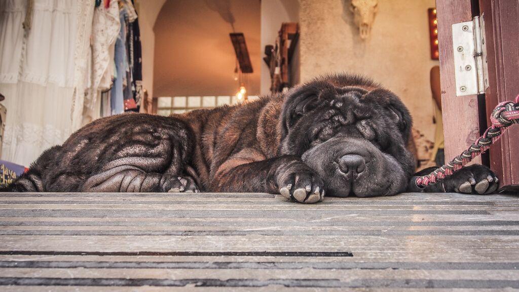 tarifa-dog