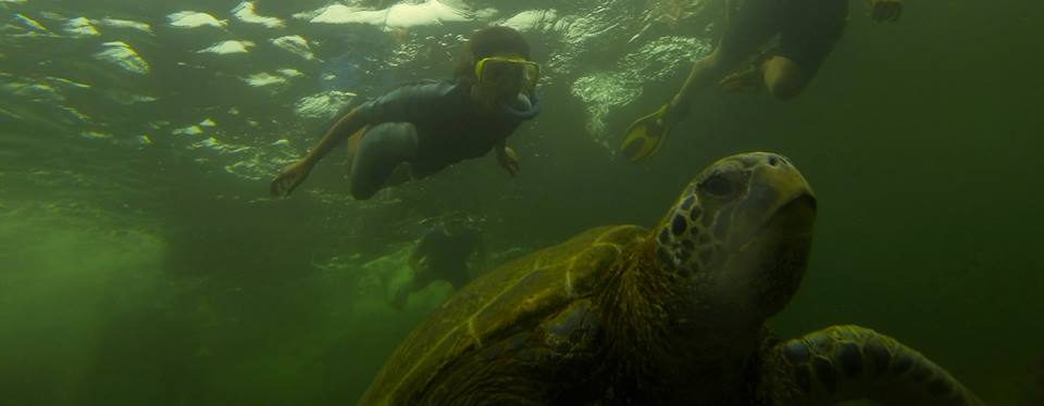 snorkeling with turtely galapagos